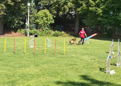 Agility Training 02