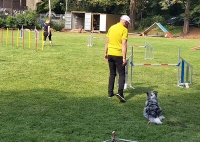 Agility Training 05