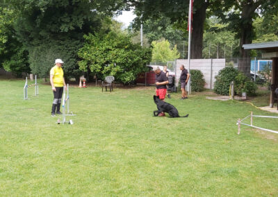 Agility Training 21