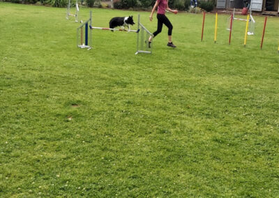 Agility Training 24