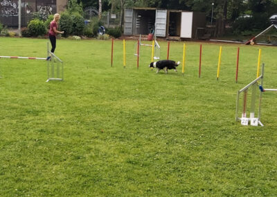 Agility Training 25
