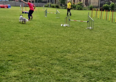 Agility Training 31
