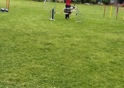 Agility Training 39